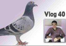 Como Vencer o espírito de Pomba-Gira | Vlog 40